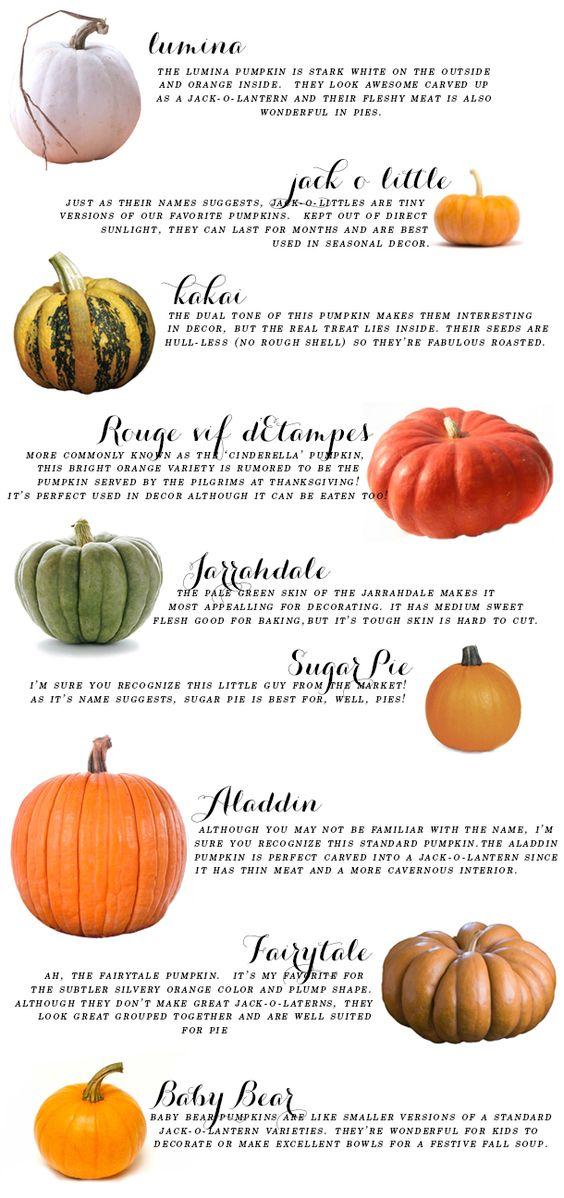 pumpkin guide.jpg